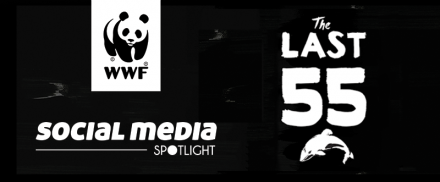 Social Media Spotlight: The Last 55 – WWF's Maui's Dolphin Campaign