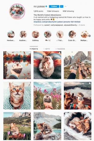 mr. pokee Instagram profile